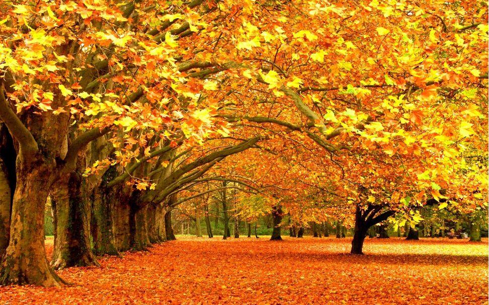 树,活着是美丽的风景,死了依然是栋梁之才.——徐光钦