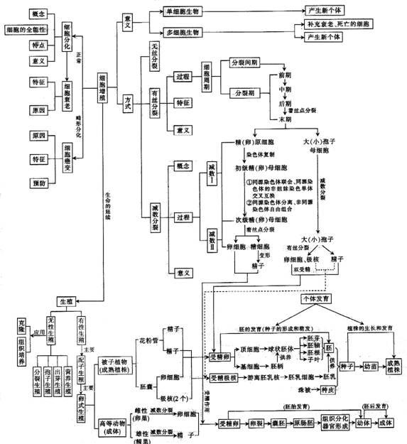 ,知识结构图