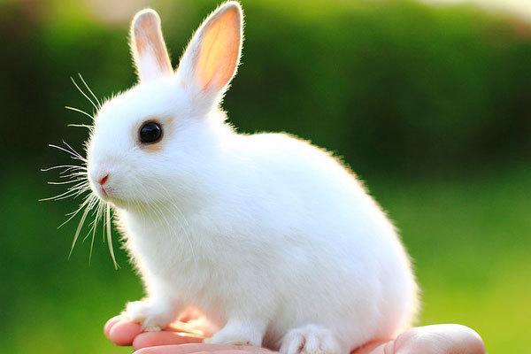 壁纸 动物 兔子 600_400